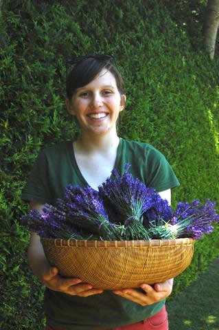 Ashlee helping with 2013 Lavender harvest