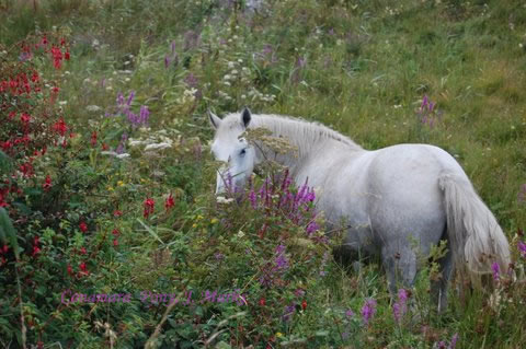 Herbs, Flowers and Horses